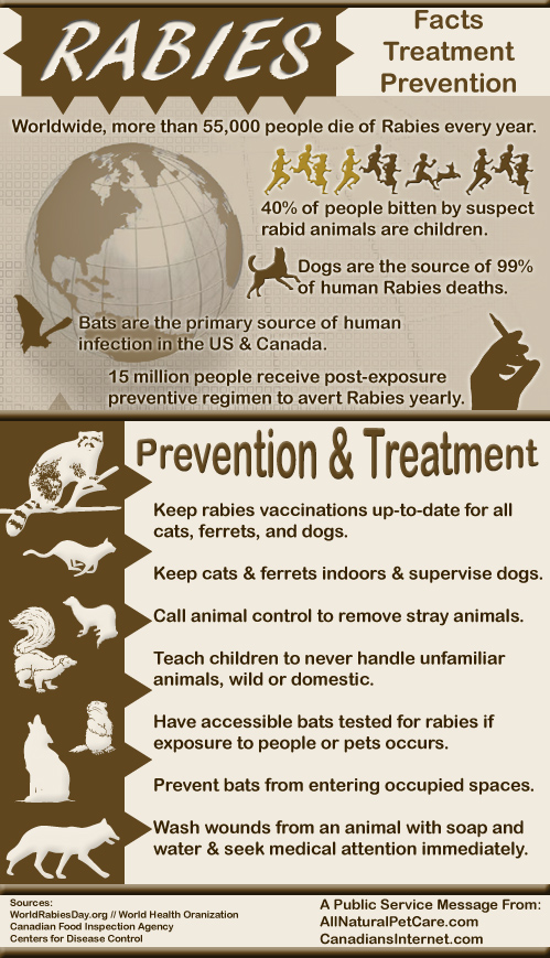 rabies facts  treatment  and prevention