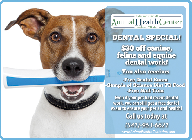 Dental Special Back by Popular Demand
